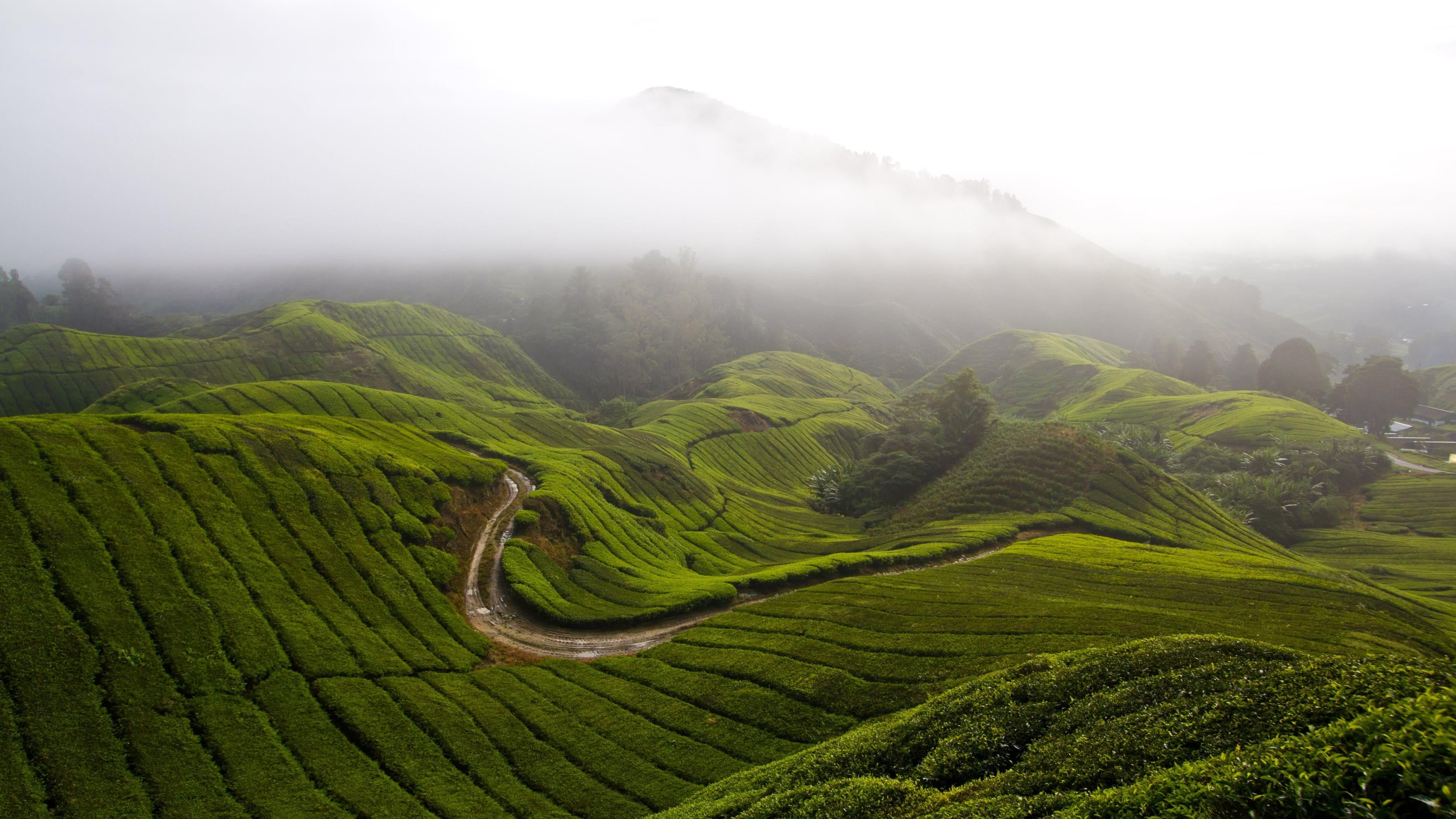 cameron highlands malaysia 4k wallpaper