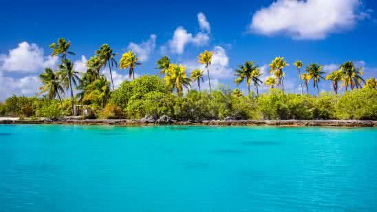 exotic ocean beach with palm trees 4k wallpaper