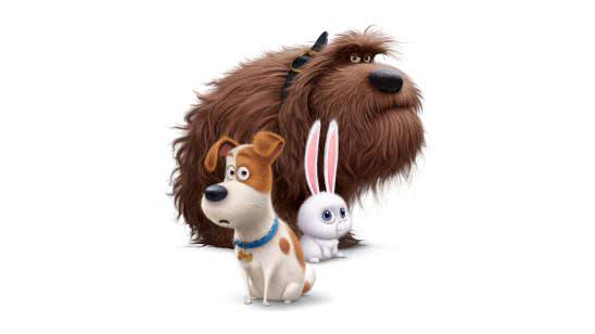 the secret life of pets 8k wallpaper