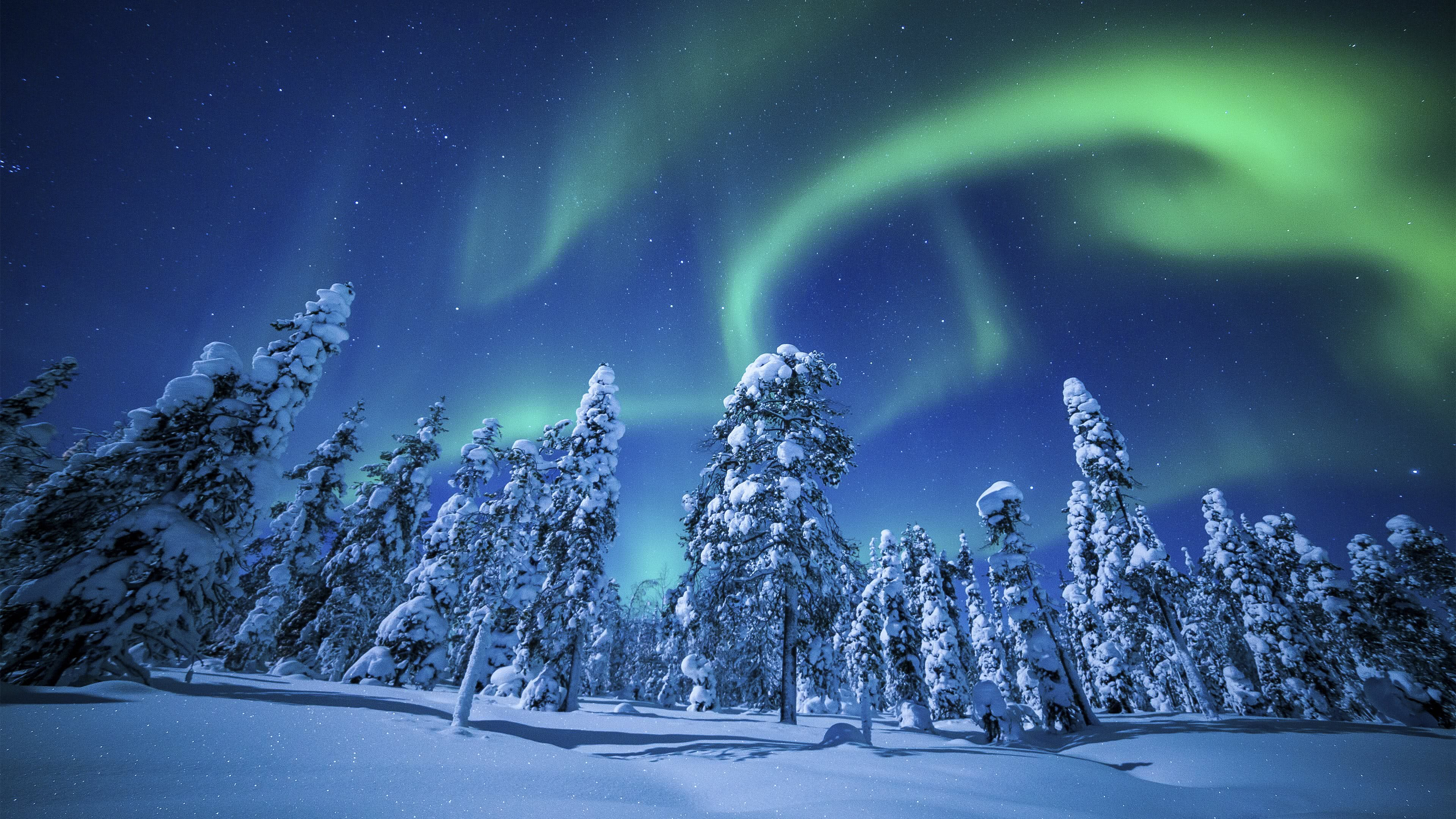 Northern Lights (Aurora Borealis) Over Winter Forest UHD