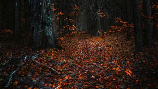 autumn leaves in dark forest uhd 8k wallpaper