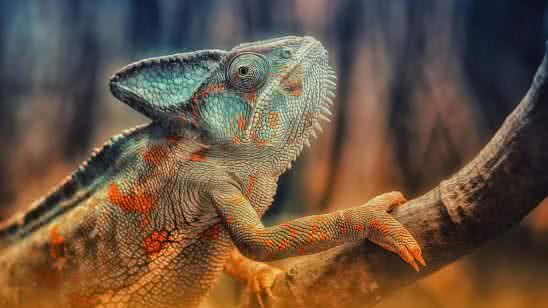 chameleon on branch uhd 4k wallpaper