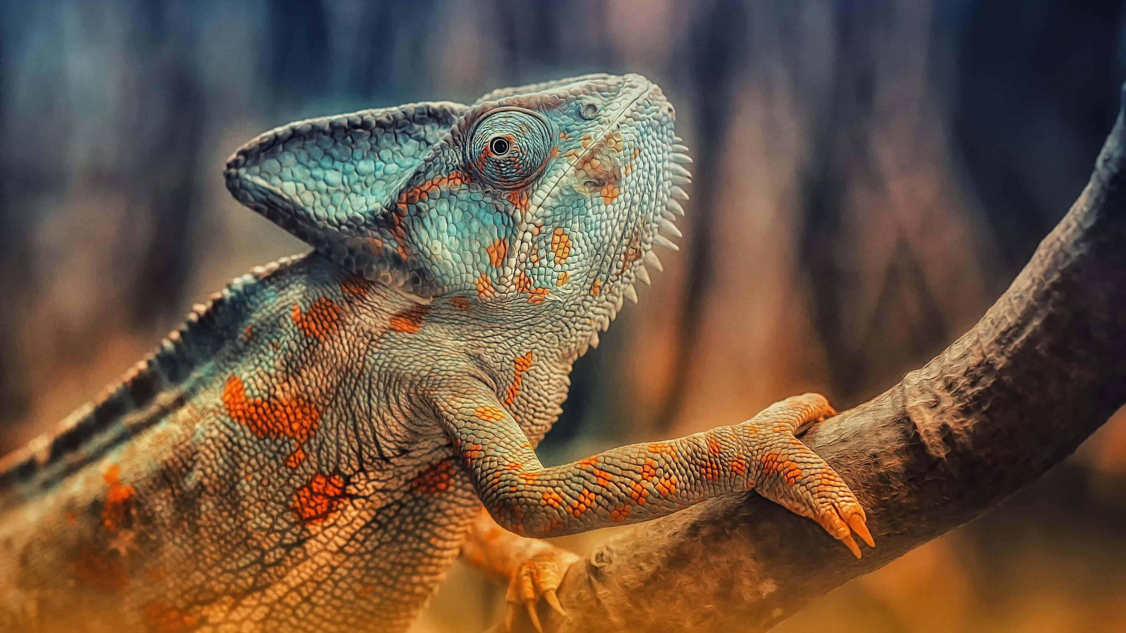 Chameleon On Branch Uhd 4k Wallpaper Pixelz