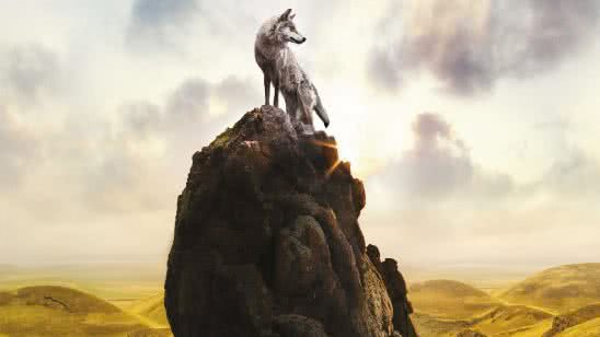 mountain wolf uhd 8k wallpaper
