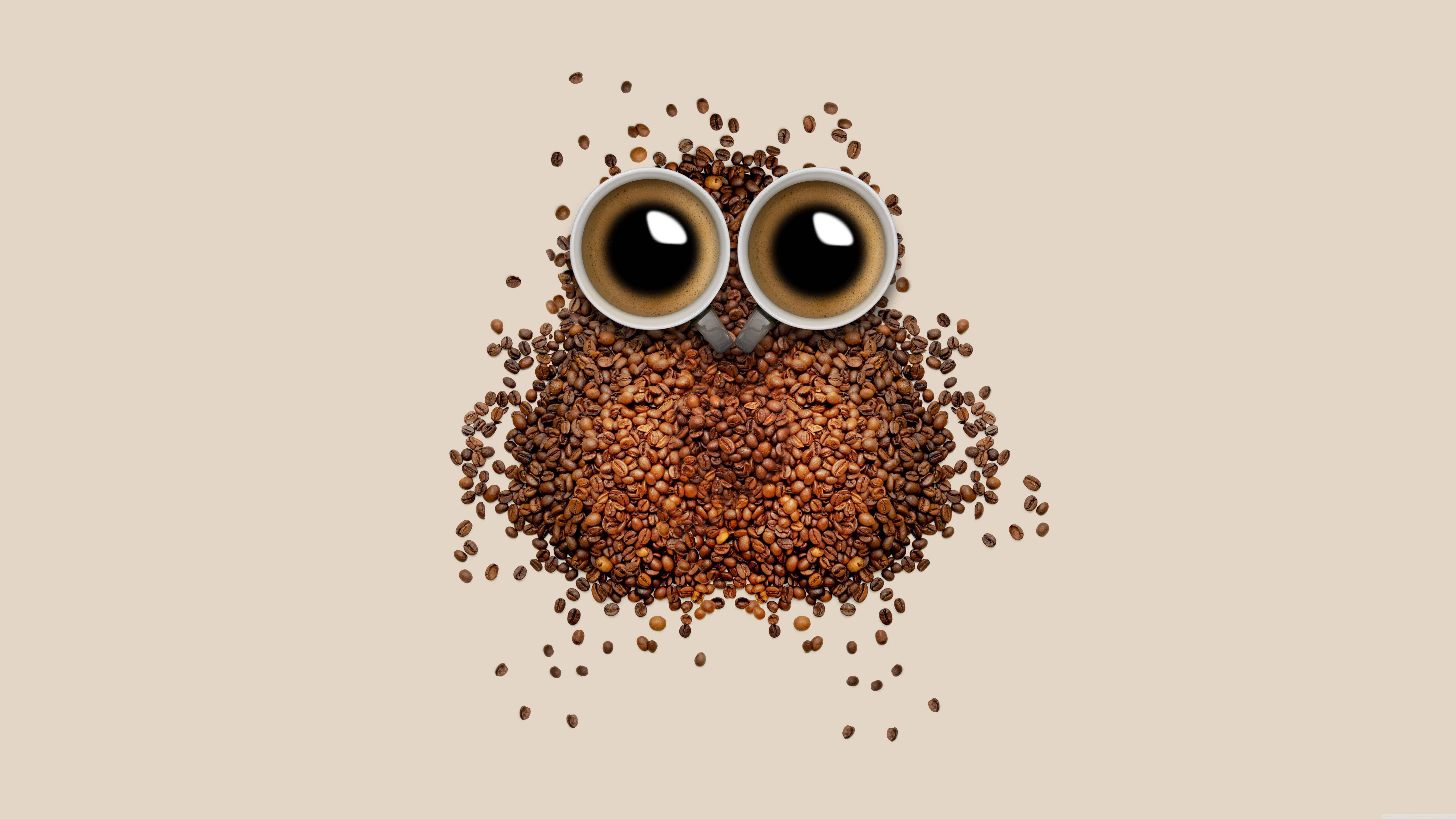 coffee bean owl uhd 8k wallpaper