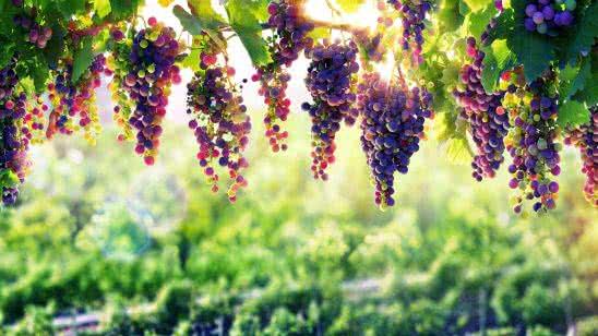 grapevine uhd 8k wallpaper