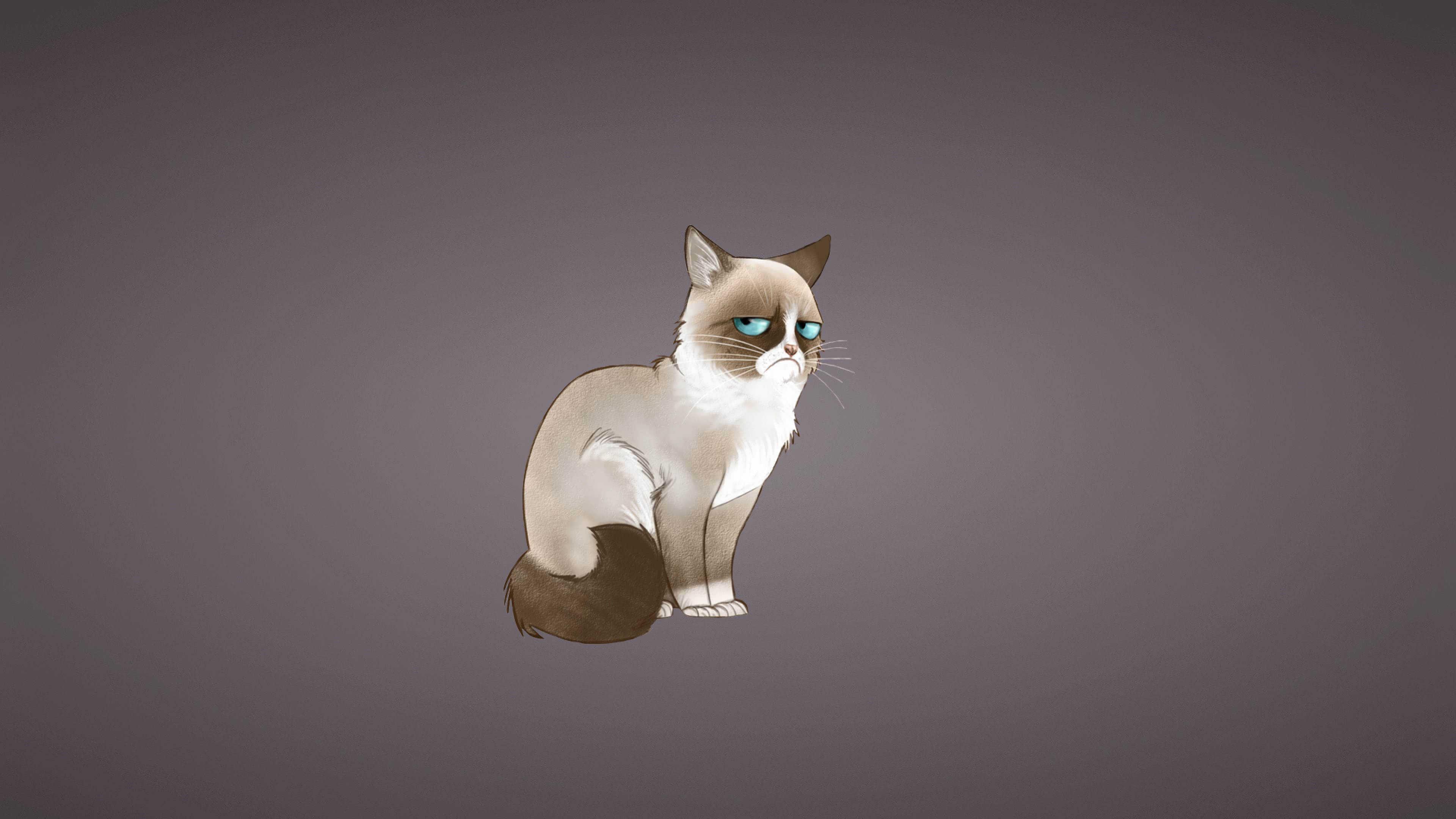 grumpy cat meme uhd 4k wallpaper