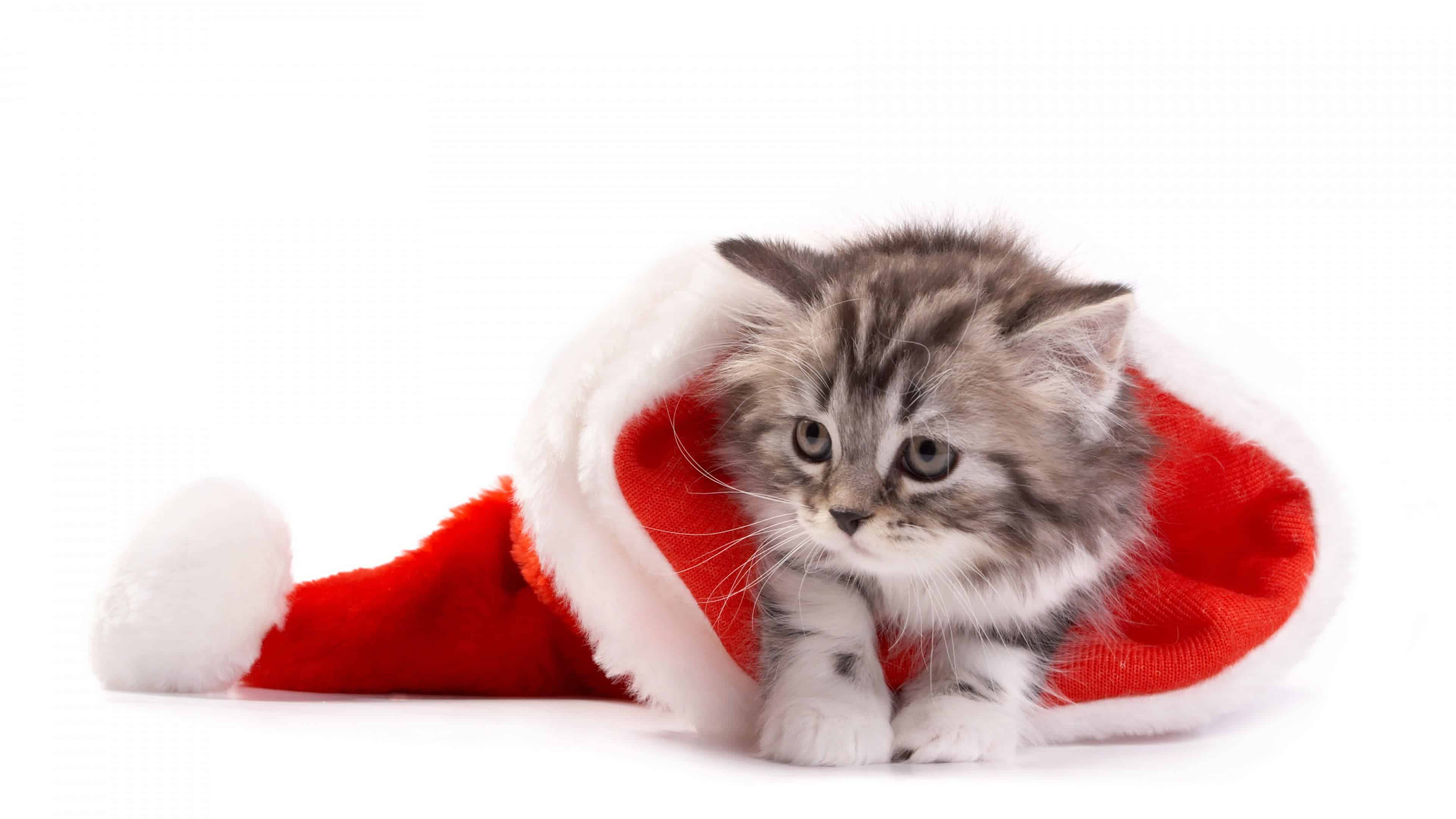kitten in santa hat uhd 4k wallpaper