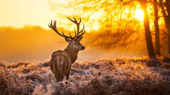 reindeer at sunset uhd 4k wallpaper