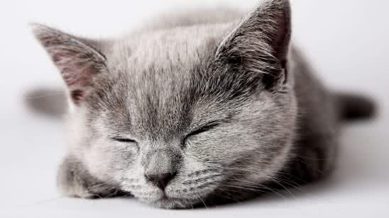 sleeping grey kitten uhd 8k wallpaper