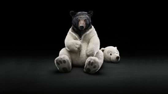 black bear in polar bear costume wqhd 1440p wallpaper