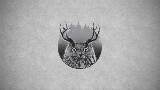 horned owl wqhd 1440p wallpaper