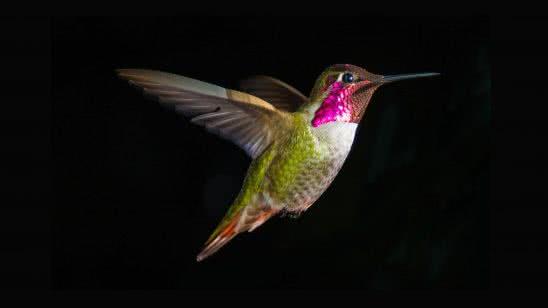 hummingbird uhd 4k wallpaper