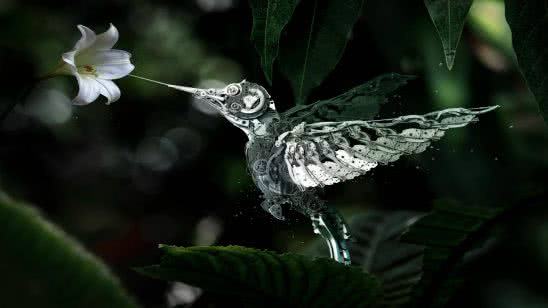 mechanical hummingbird wqhd 1440p wallpaper