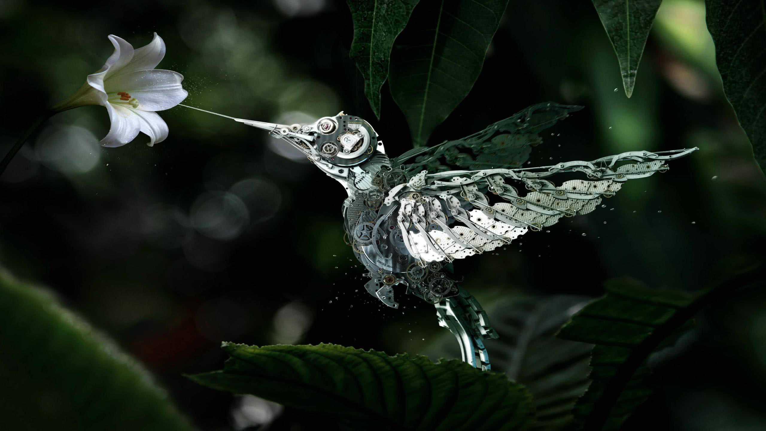 mechanical hummingbird wqhd 1440p wallpaper