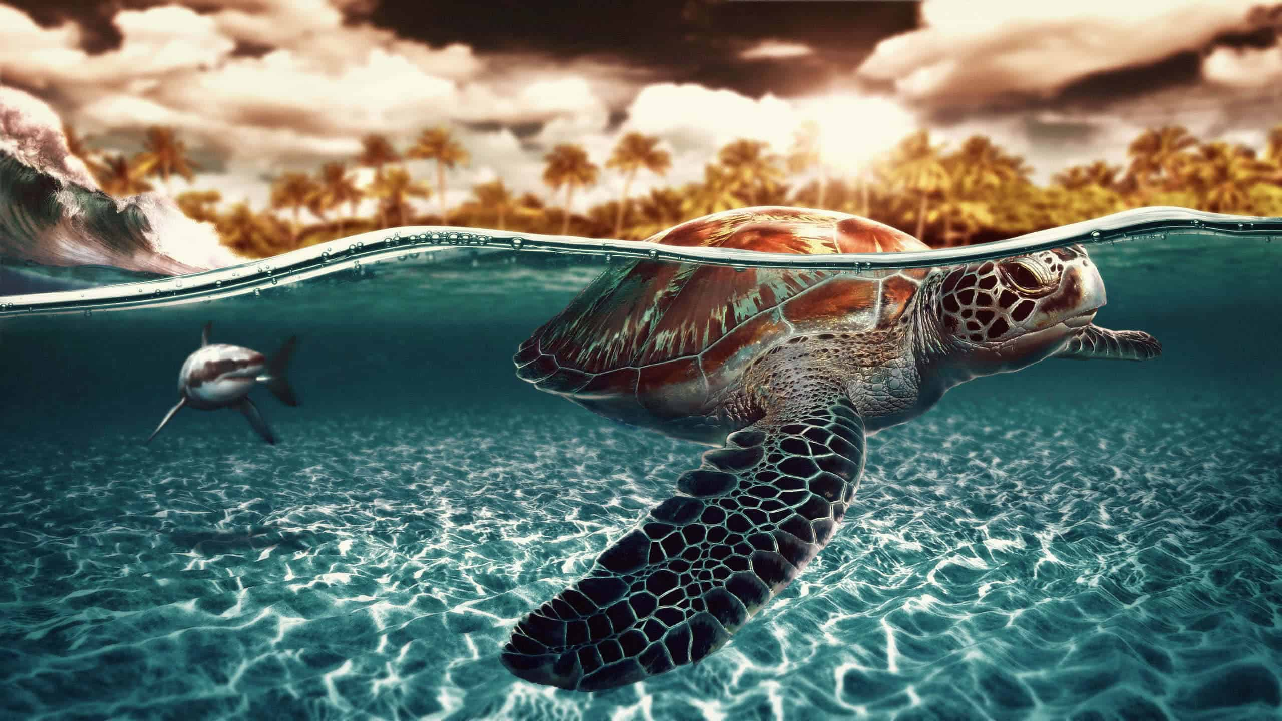 sea turtle wqhd 1440p wallpaper