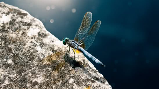 dragonfly uhd 4k wallpaper