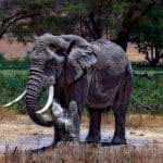 elephant in serengeti national park tanzania uhd 4k wallpaper