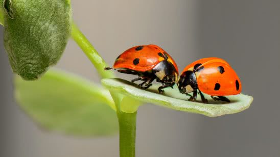 ladybirds uhd 4k wallpaper