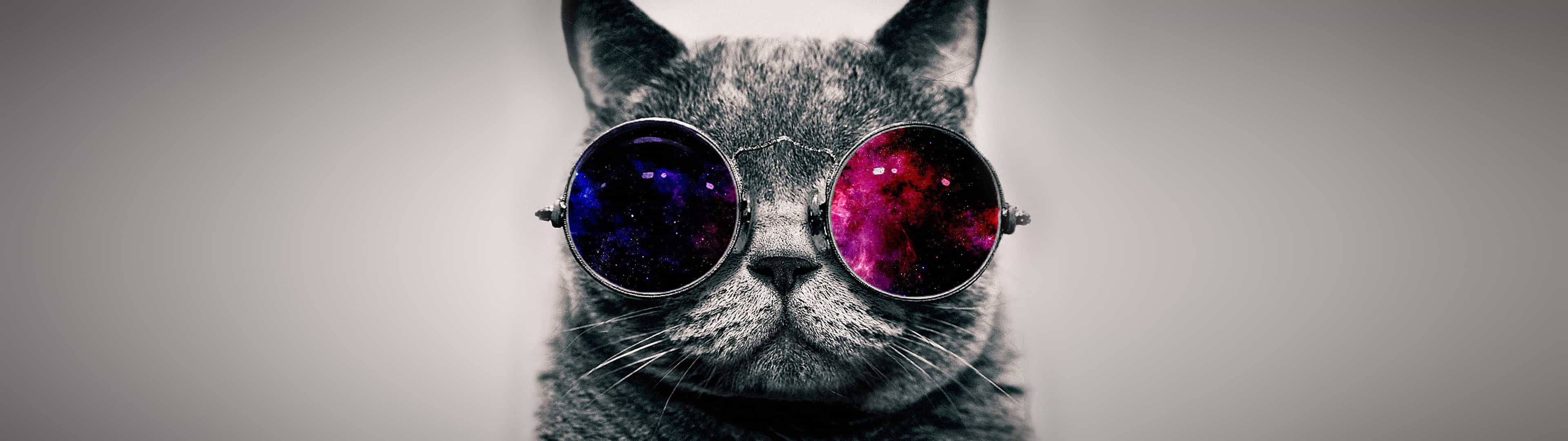 Cat With Sunglasses Dual Monitor Wallpaper