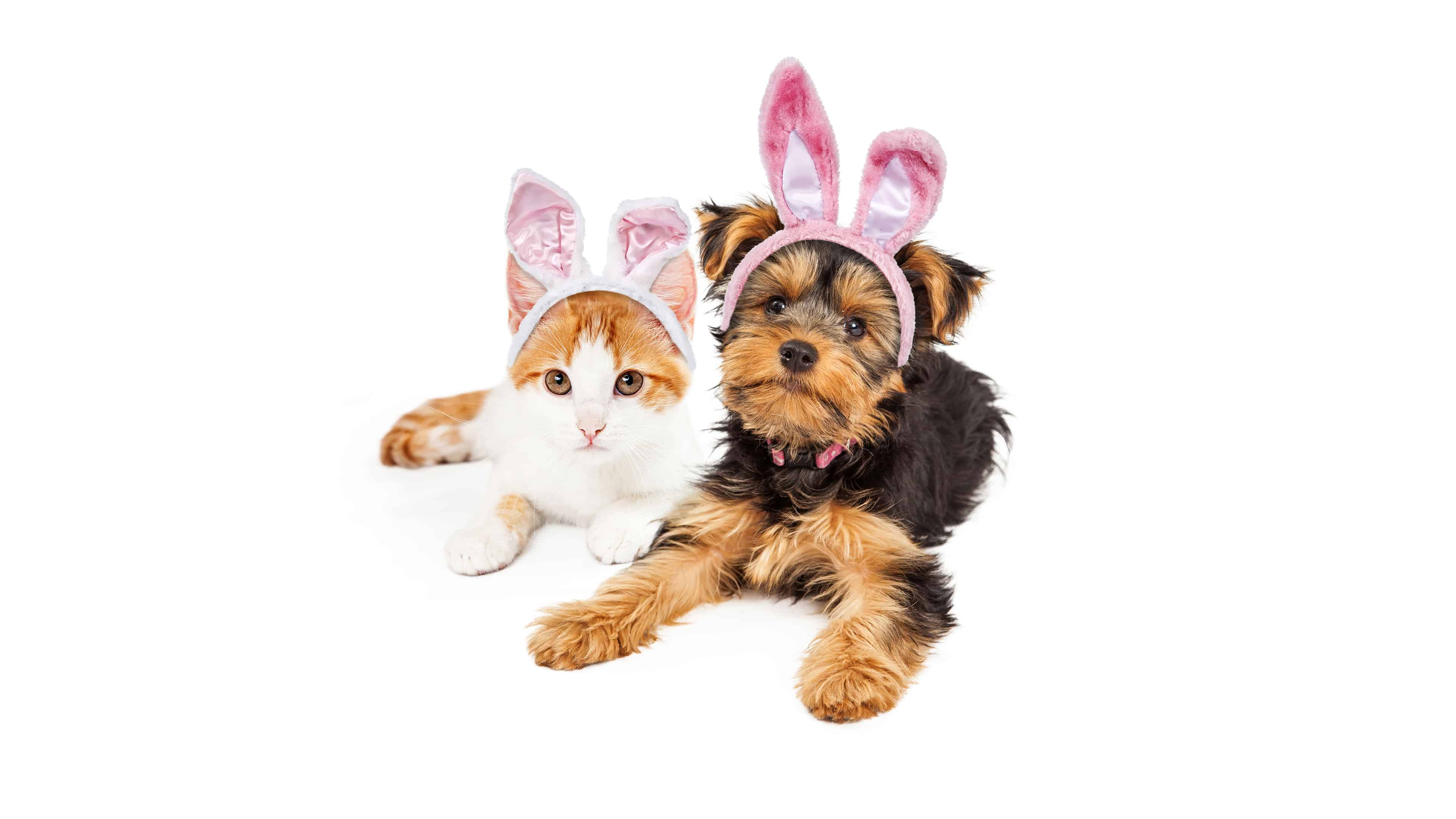 dog and cat with easter bunny ears uhd 4k wallpaper