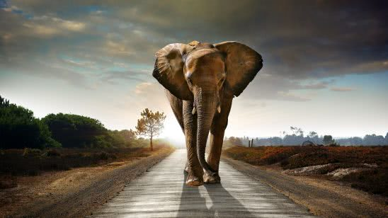 elephant walking on the road uhd 4k wallpaper
