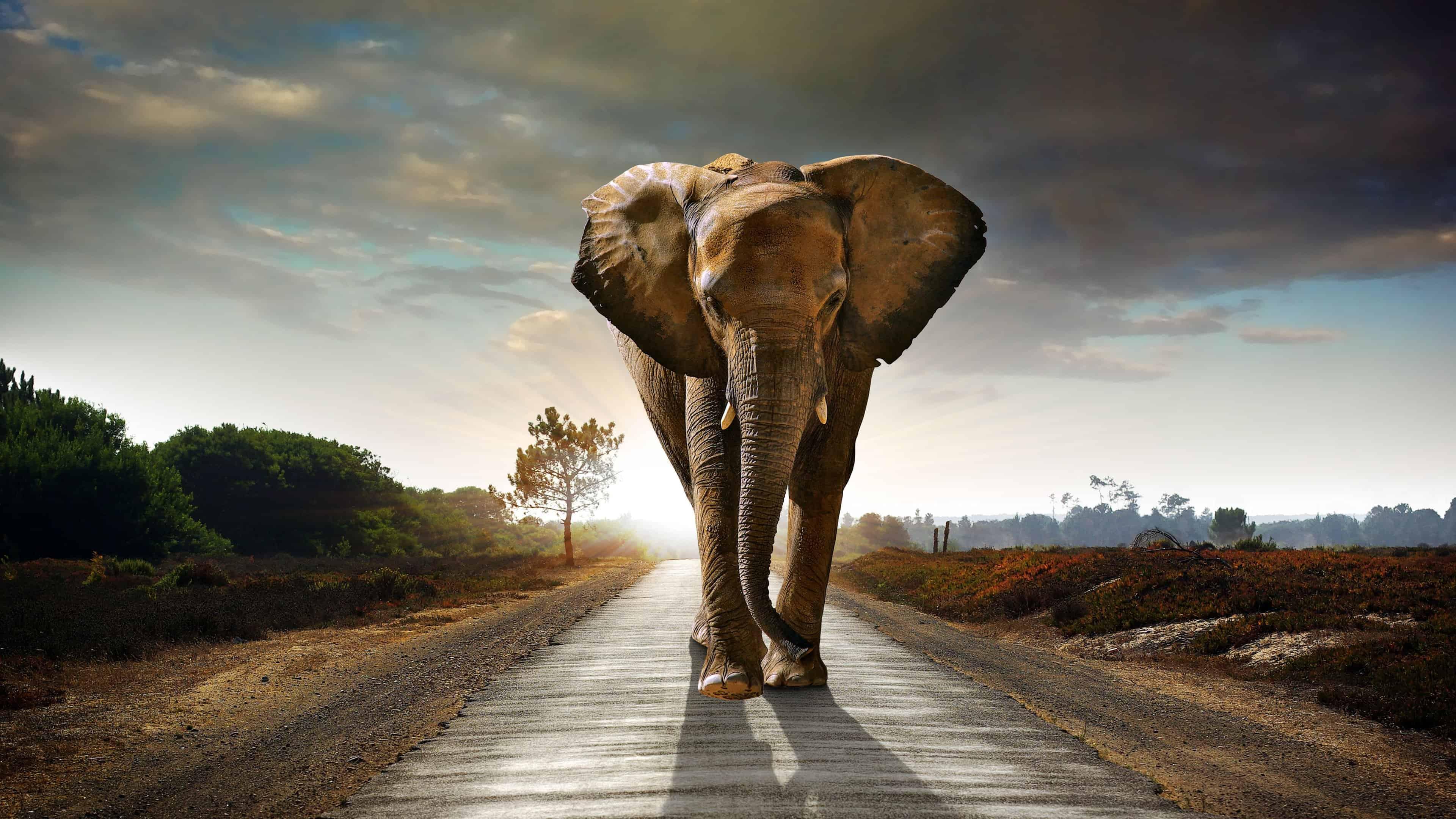 elephant walking on the road uhd 4k wallpaper