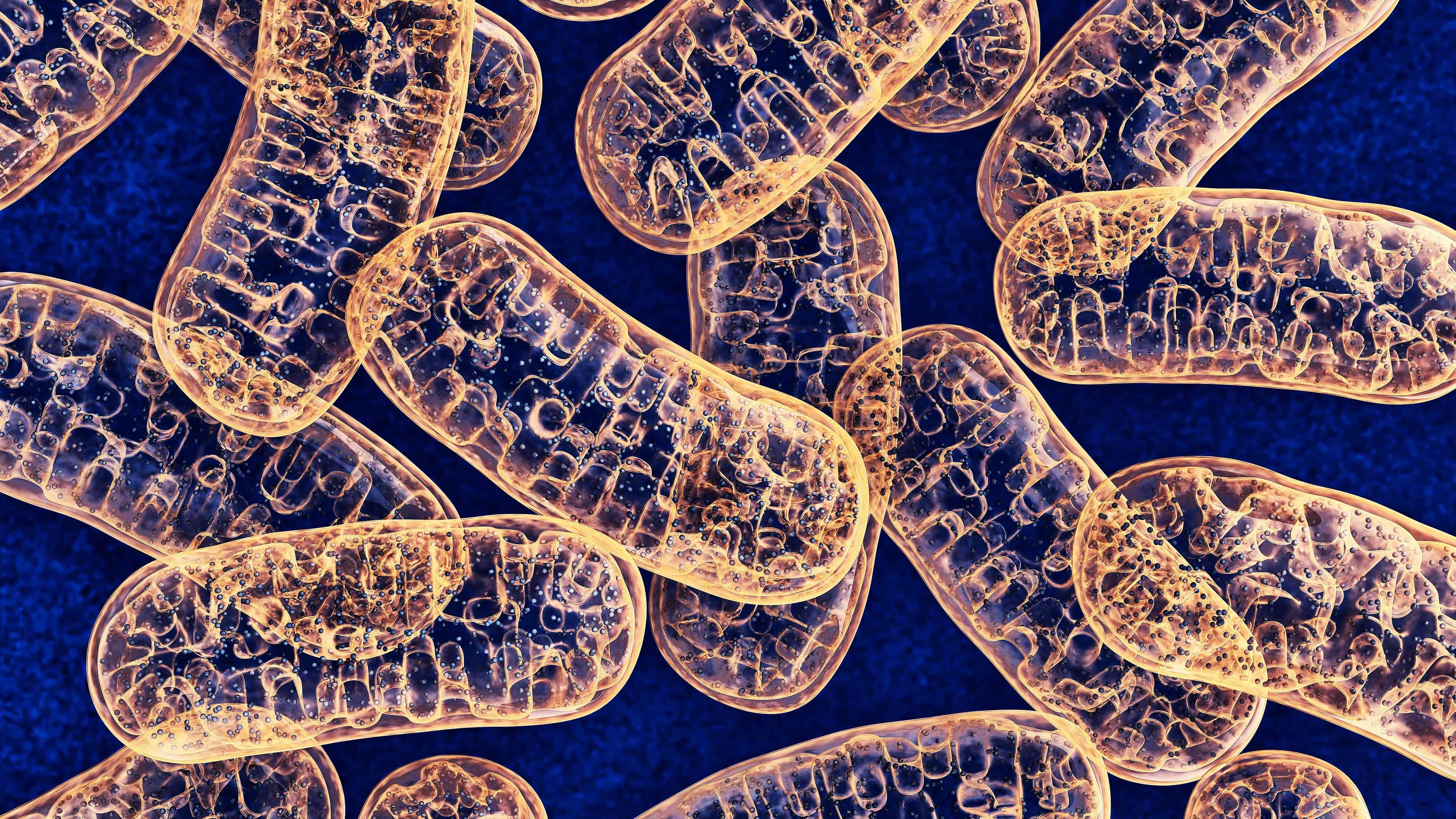mitochondria uhd 4k wallpaper