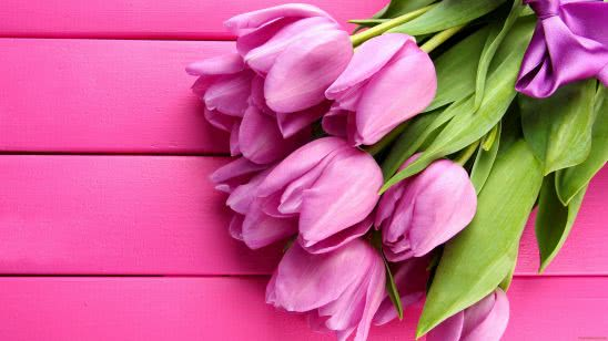 tulips pink uhd 4k wallpaper