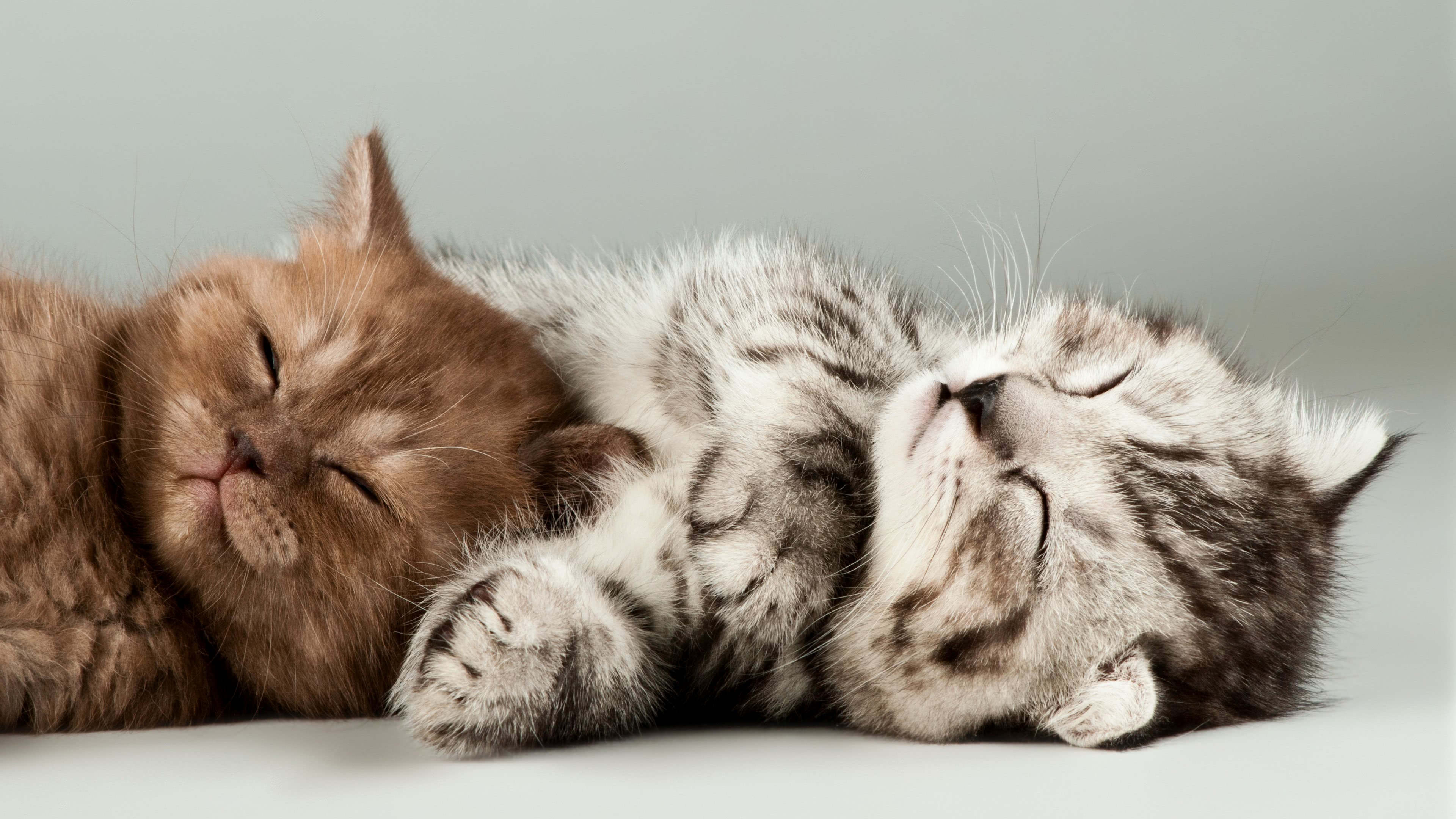 kittens sleeping uhd 4k wallpaper