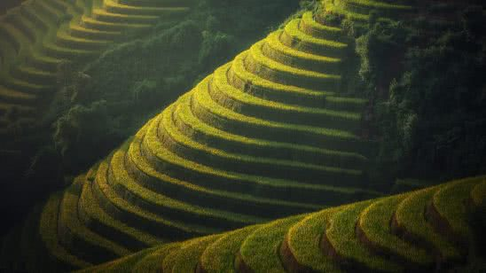 rice terraces bali indonesia uhd 4k wallpaper
