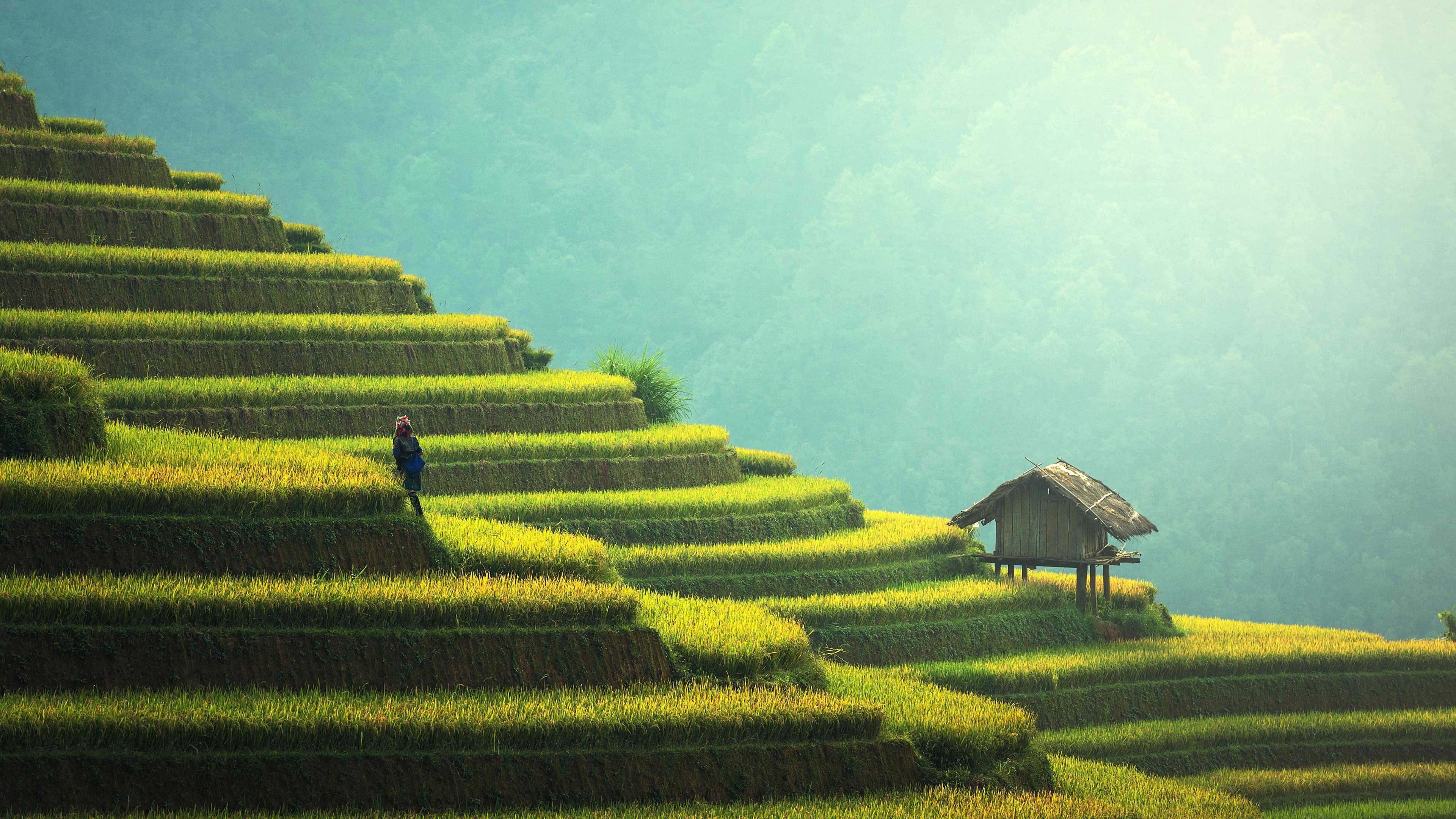 rice terraces china uhd 4k wallpaper