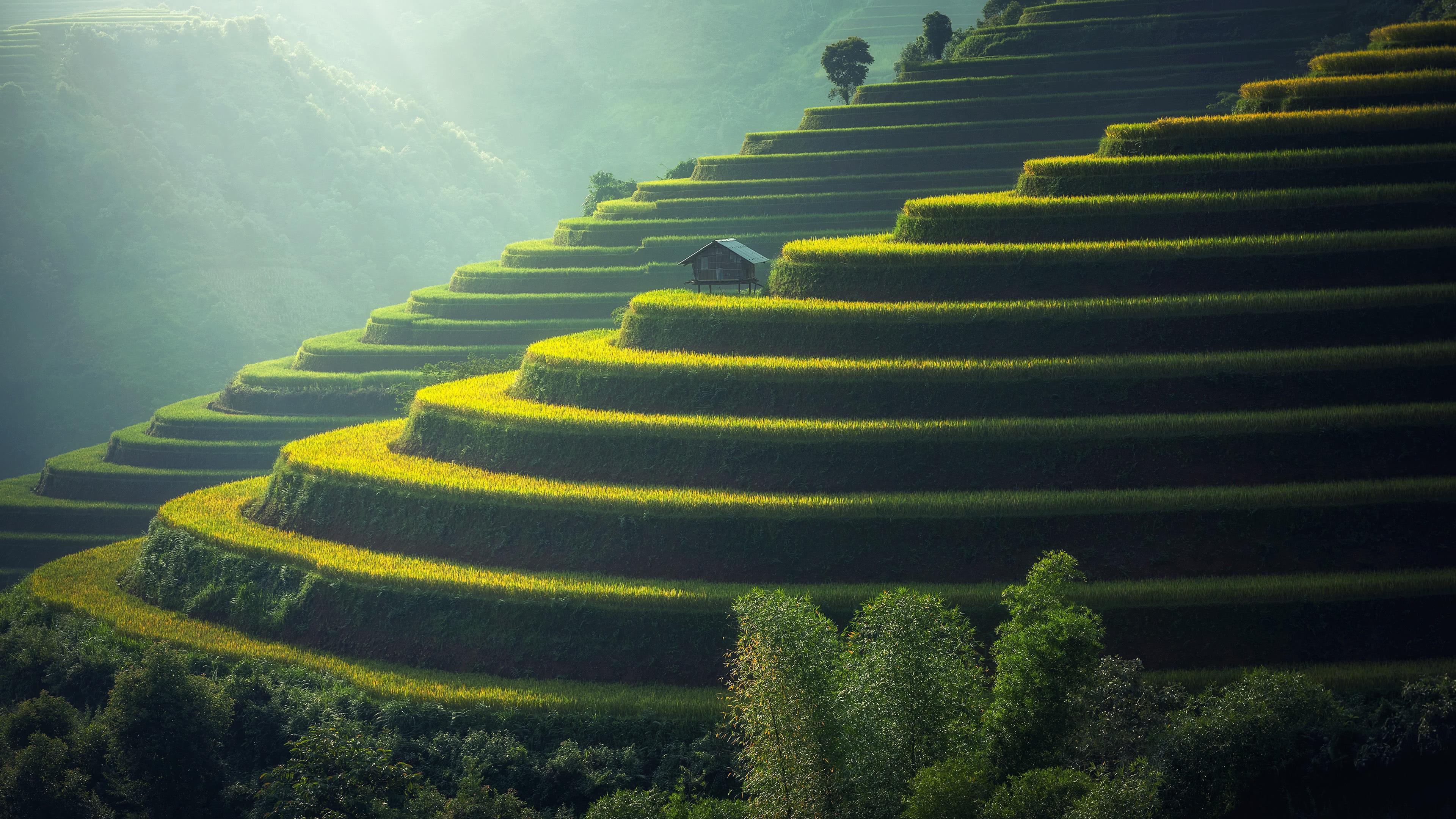 rice terraces uhd 4k wallpaper