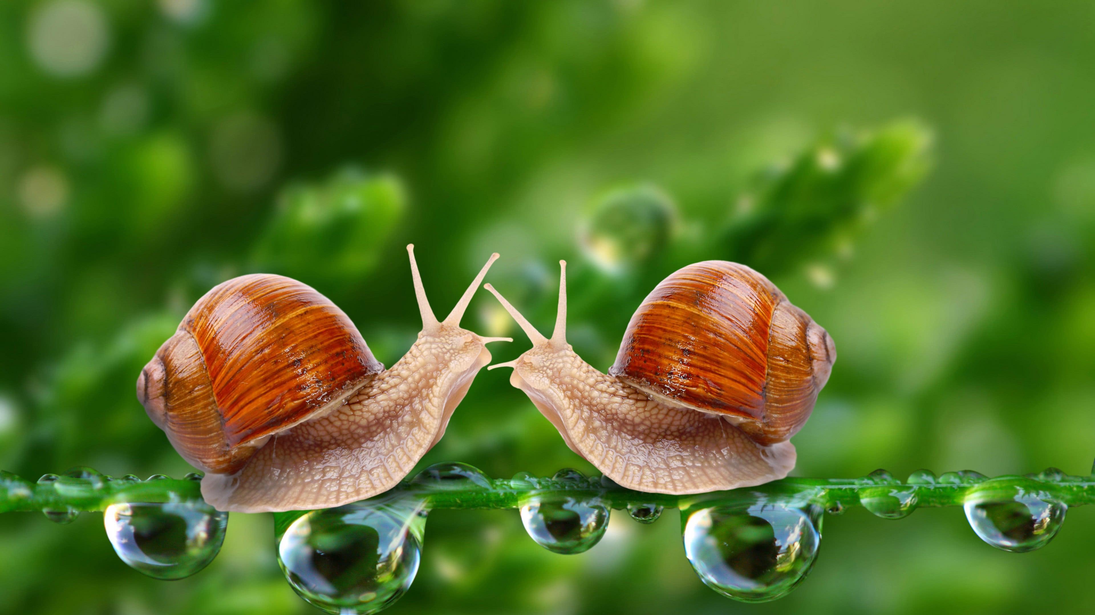 snails uhd 4k wallpaper