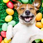 easter dog uhd 4k wallpaper