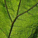 "<span itemprop=""name"">Plant Veins Leaf Macro</span>"