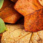 autumn leaves uhd 4k wallpaper
