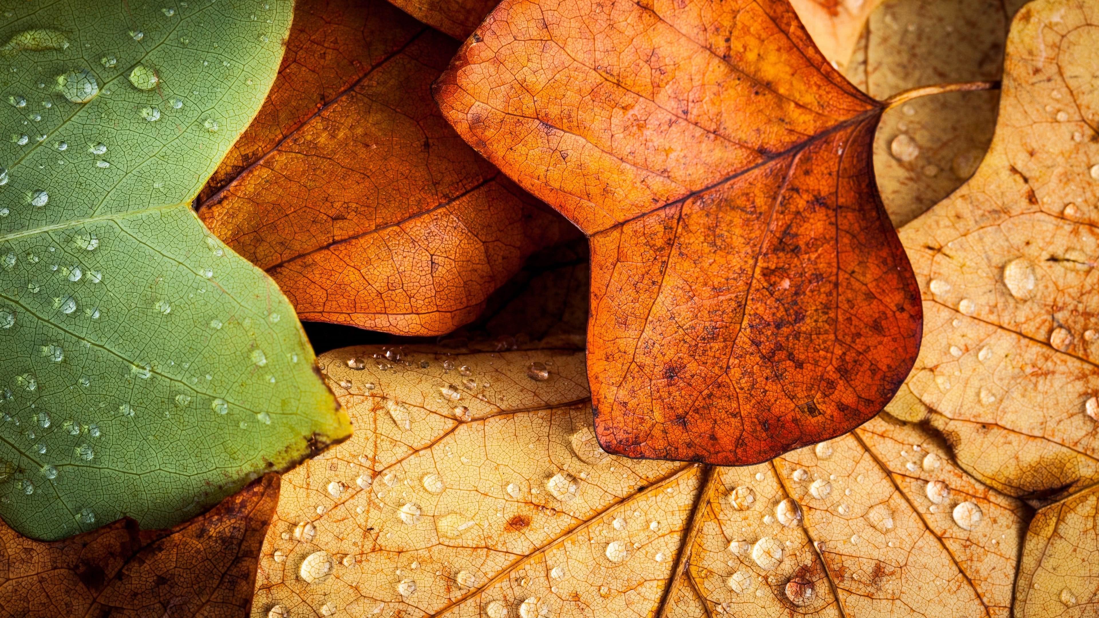 autumn leaves uhd 4k wallpaper