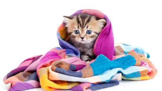 kitten in a blanket uhd 4k wallpaper