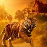 angry tiger wqhd 1440p wallpaper