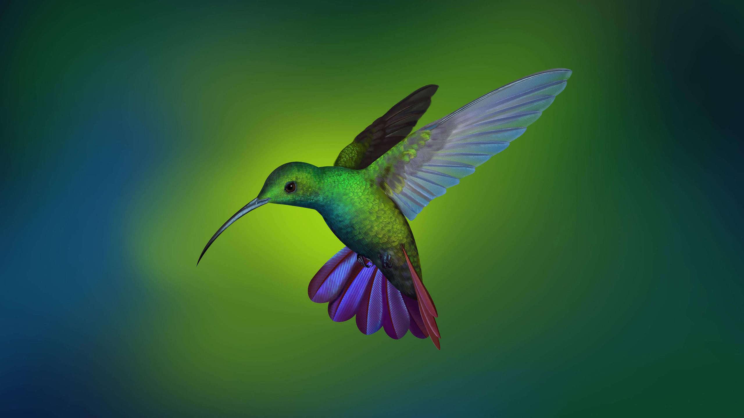 hummingbird wqhd 1440p wallpaper