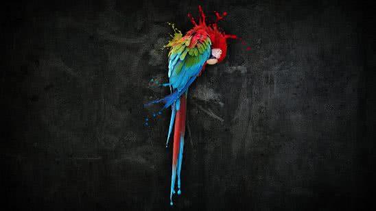 parrot wqhd 1440p wallpaper