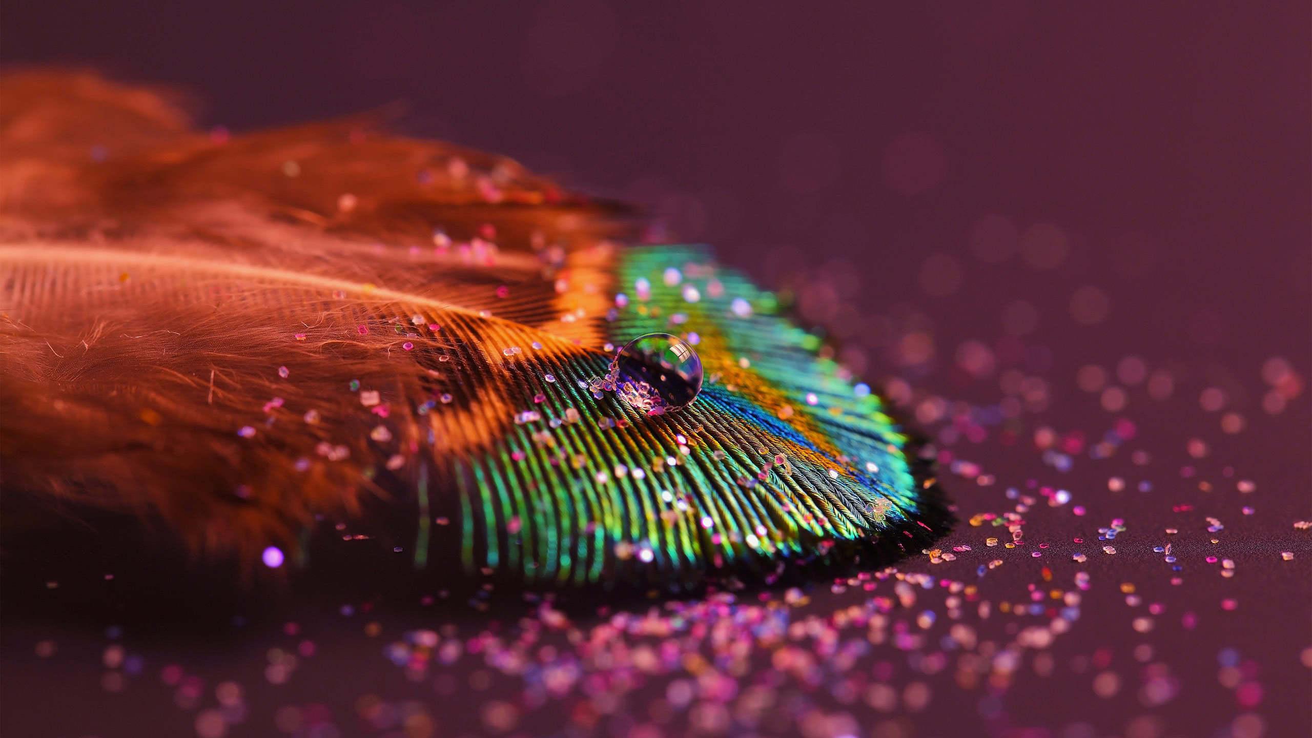 peacock feather wqhd 1440p wallpaper