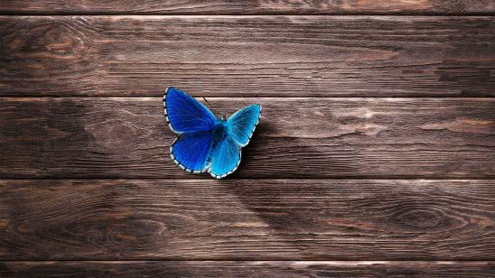 butterfly blue on wood uhd 4k wallpaper