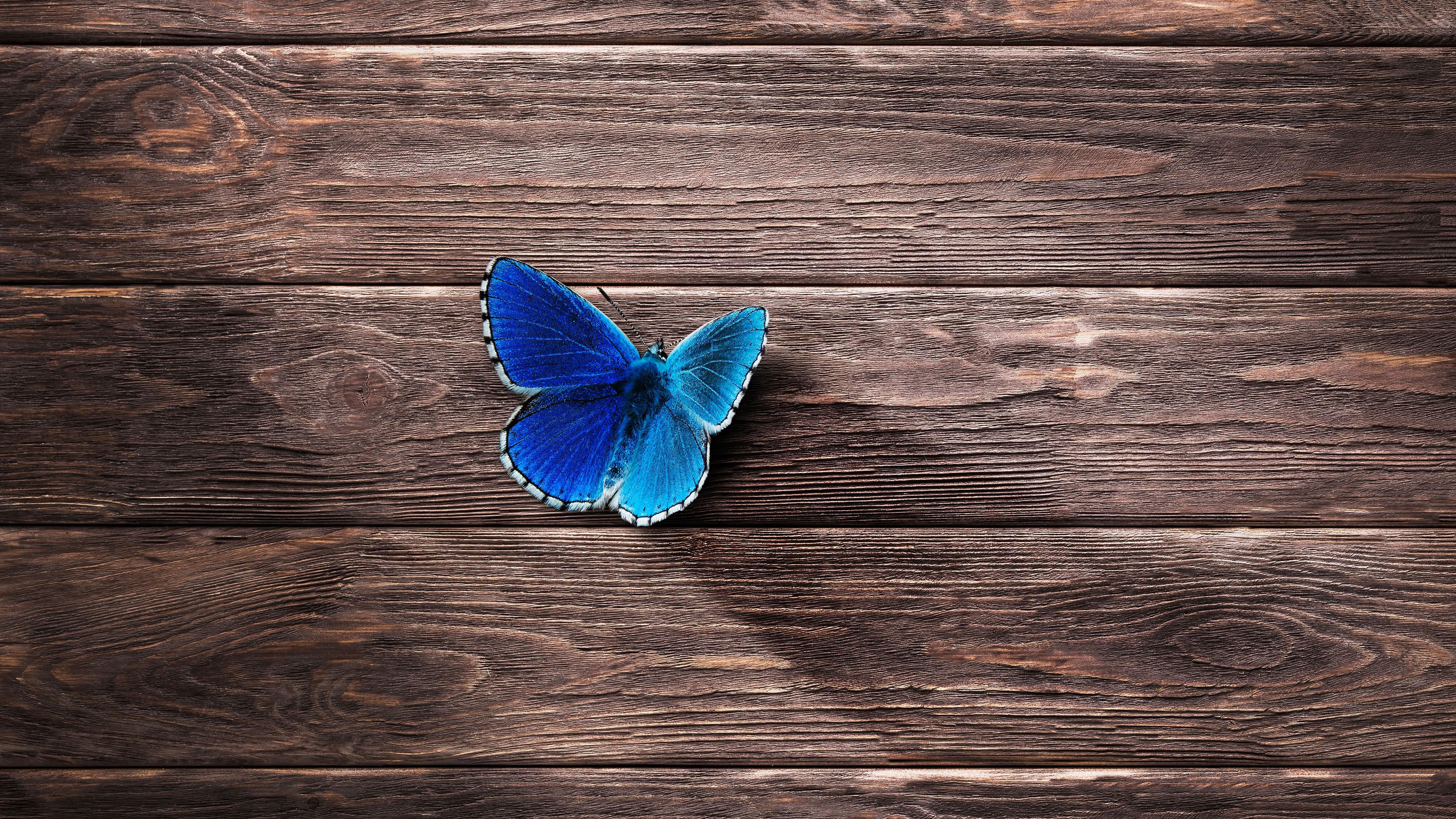 Butterfly Blue On Wood UHD 4K Wallpaper - Pixelz.cc