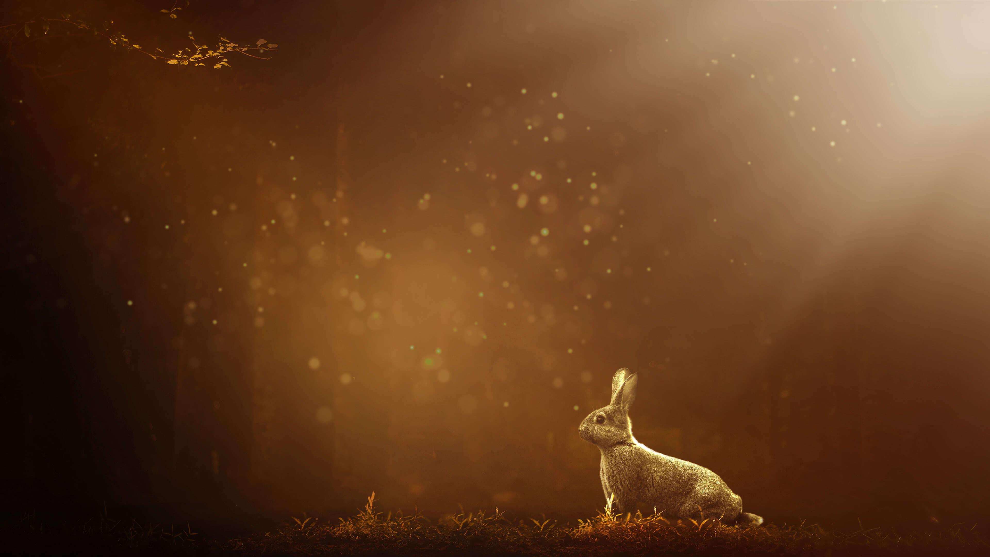 rabbit uhd 4k wallpaper