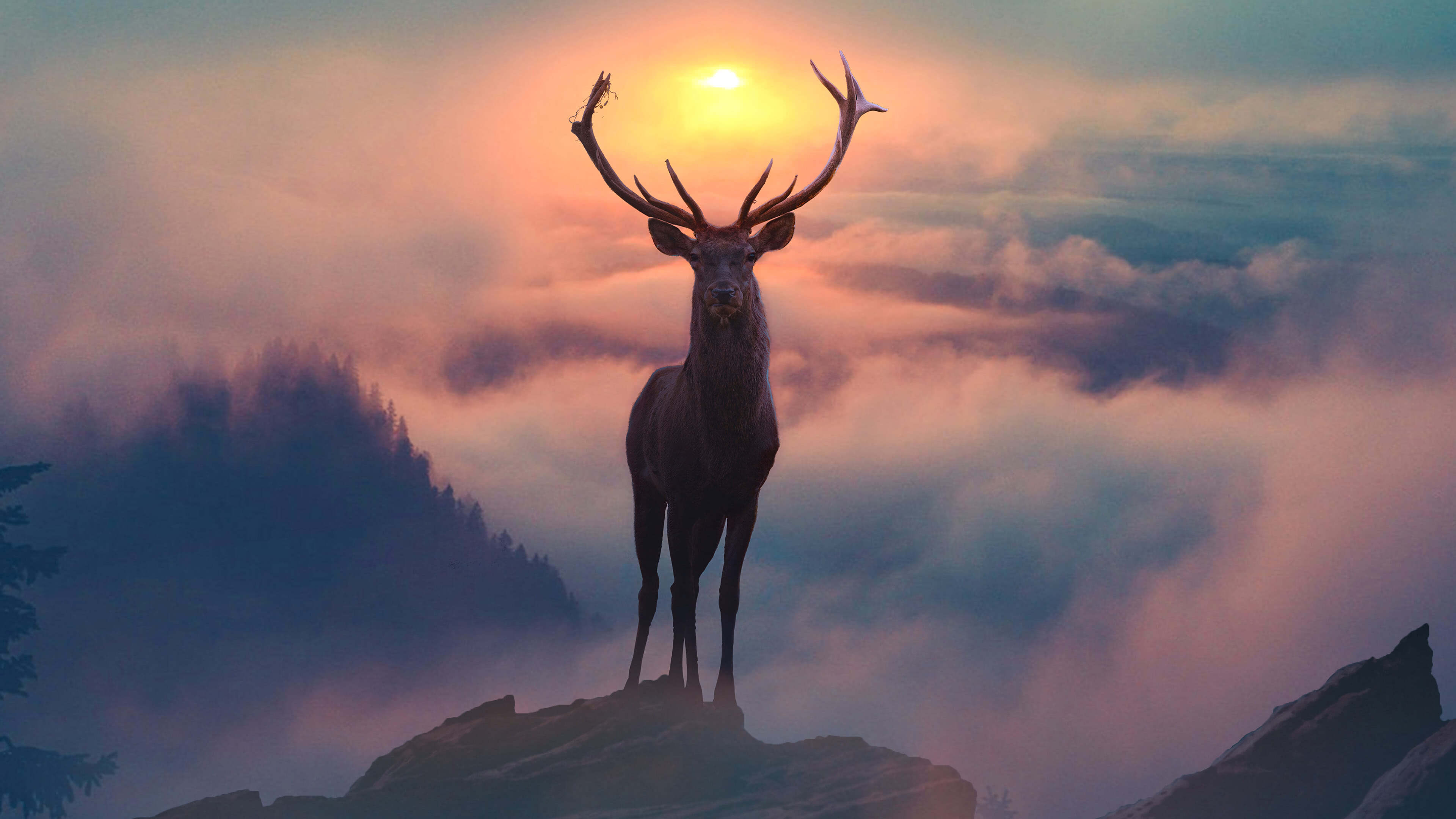 reindeer mountain fog uhd 4k wallpaper